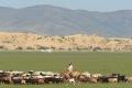 mongolei-3-017a