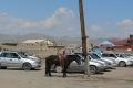 mongolei-3-256a