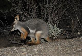 australien-3-051a
