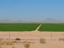 Kalifornien Süd: Die Wüste lebt 2