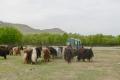 mongolei-2-030a