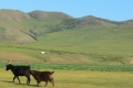 mongolei-3-067a