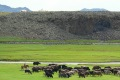 mongolei-3-148a