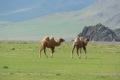 mongolei-3-297a